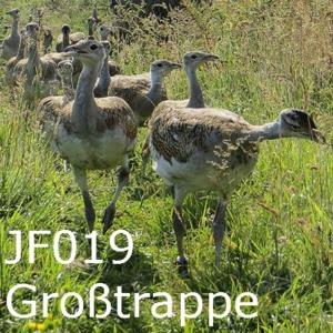 Grosstrappe