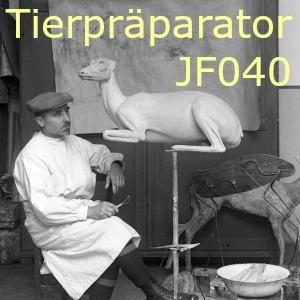 JF040 Tierpräparator