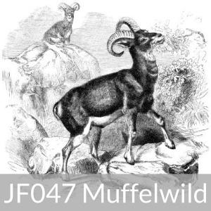 JF047 Muffelwild