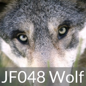 JF048 Wolf