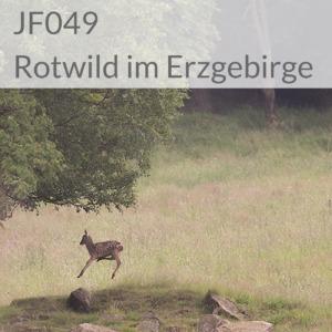 Rotwild im Erzgebirge